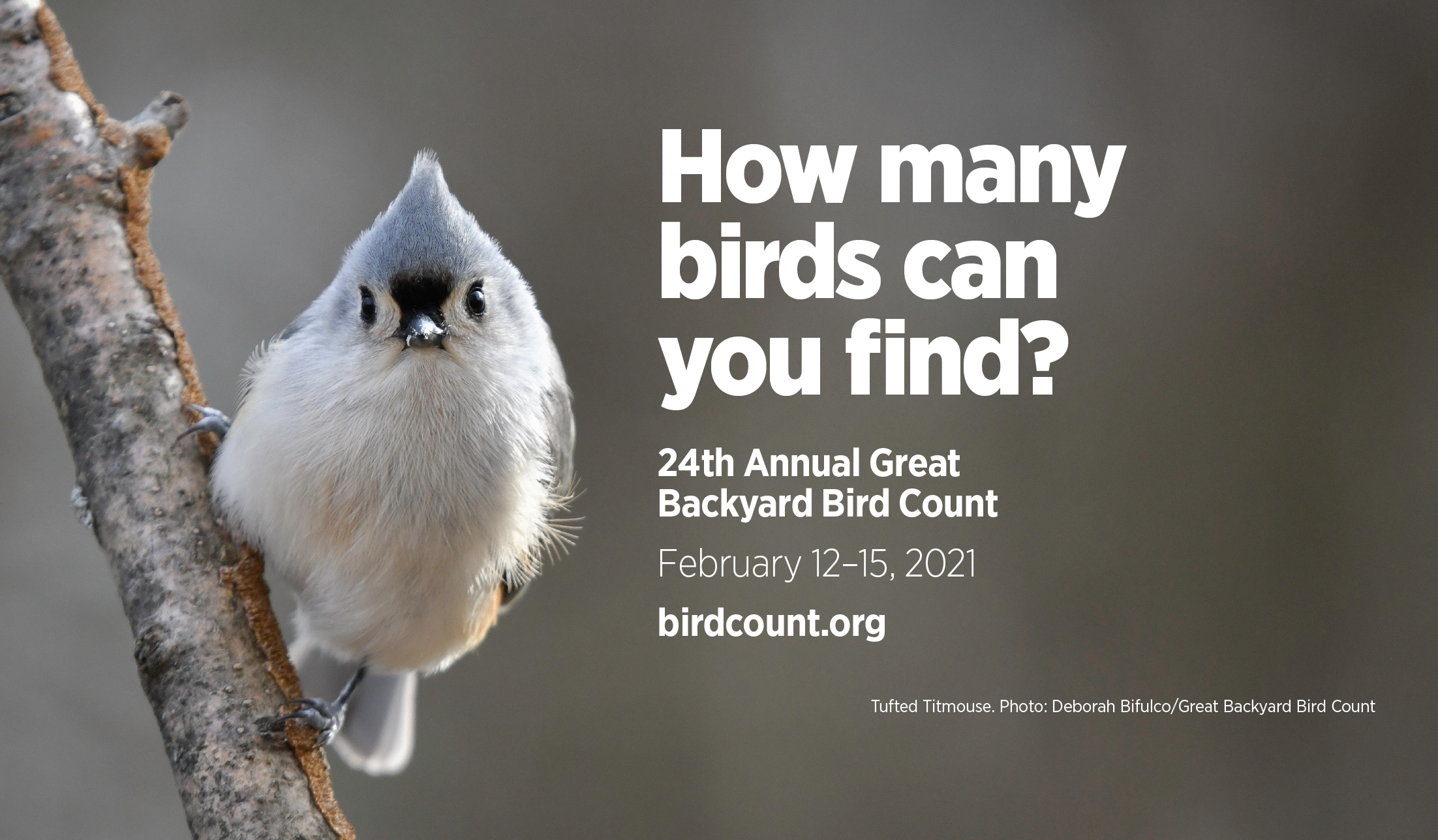Count Your Birds