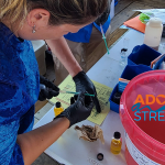 Volunteers monitor water quality for the SC AAS program